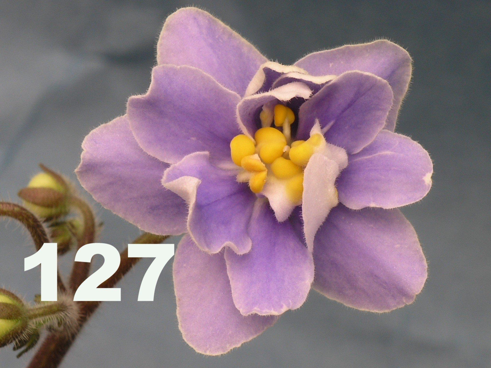 [127] 127