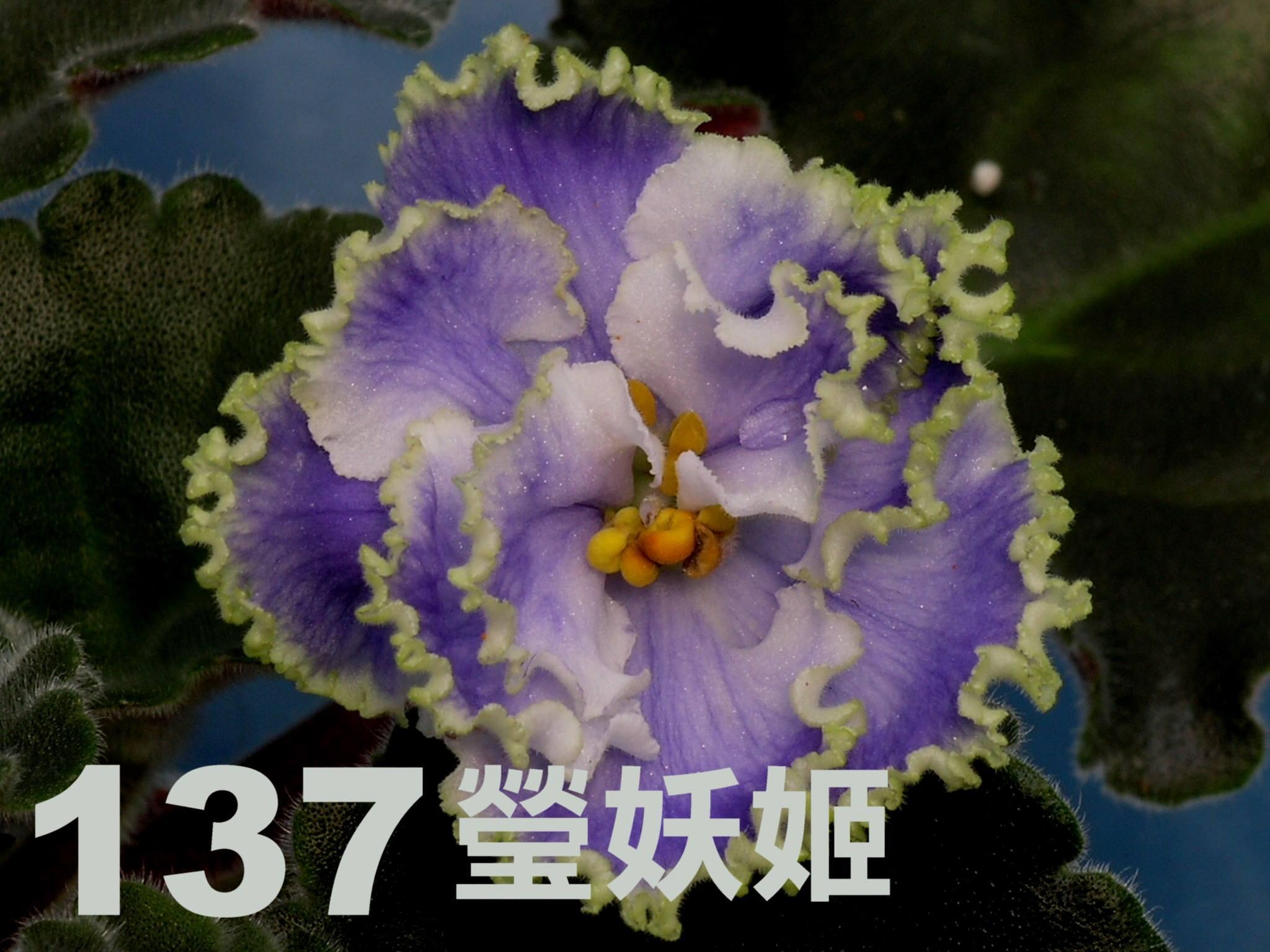 [137] Kei-Yoki 137