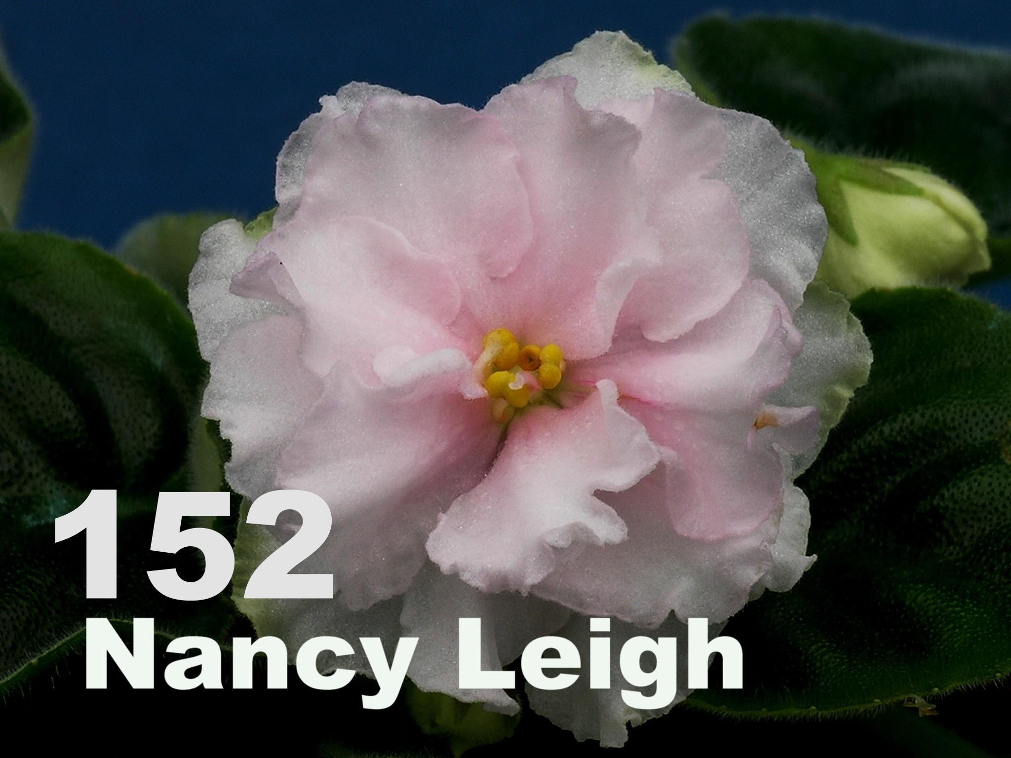 [152] Nancy Leigh 152