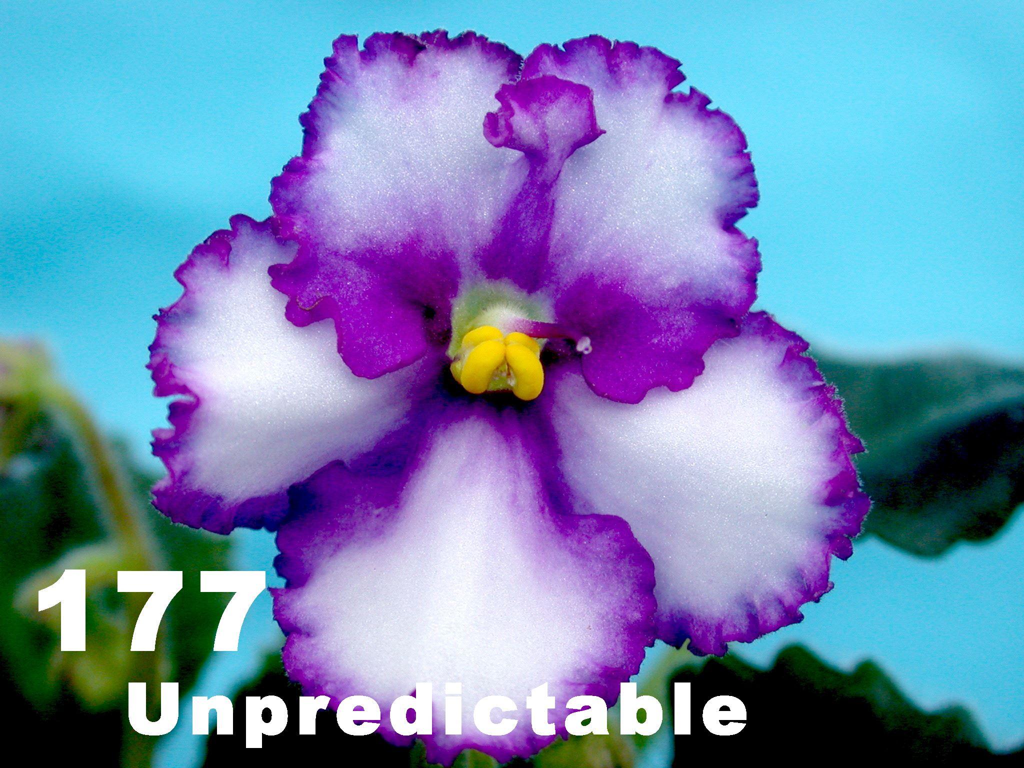 [177] Unpredictable 177
