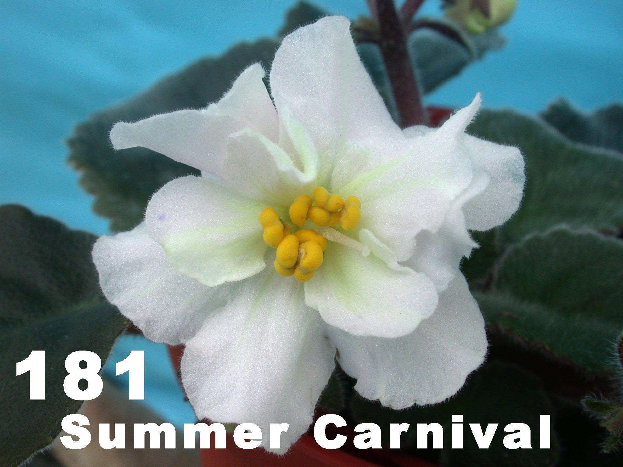 [181] Summer Carnival 181