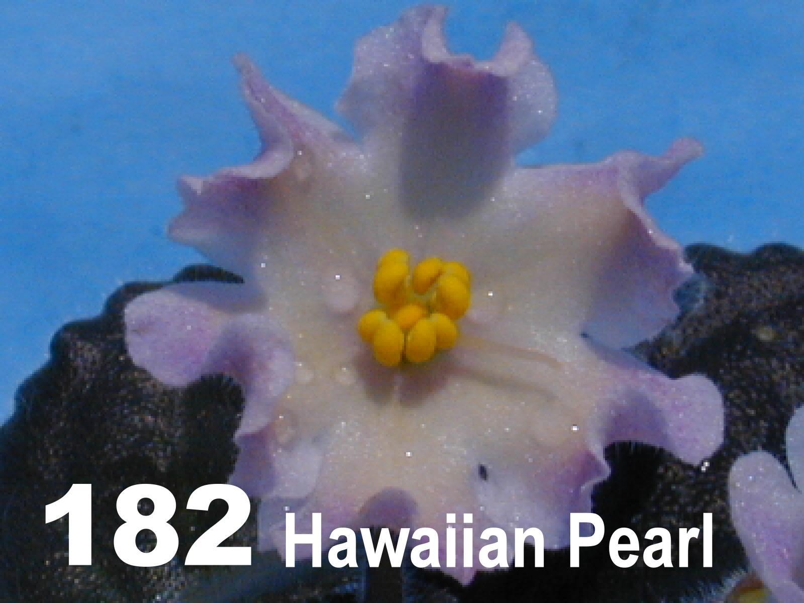 [182] Hawaiian Pearl 182