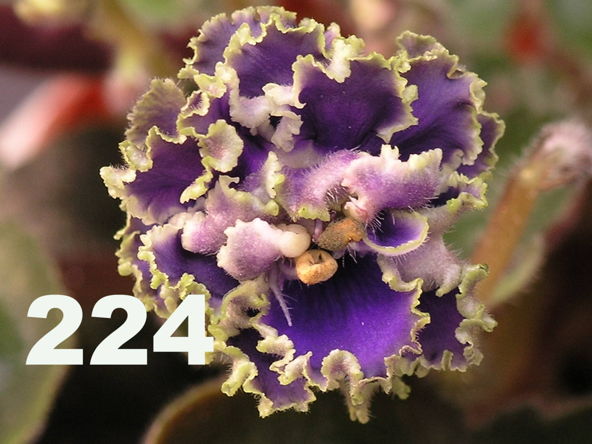 [224] Rob's Ruff Stuff 224