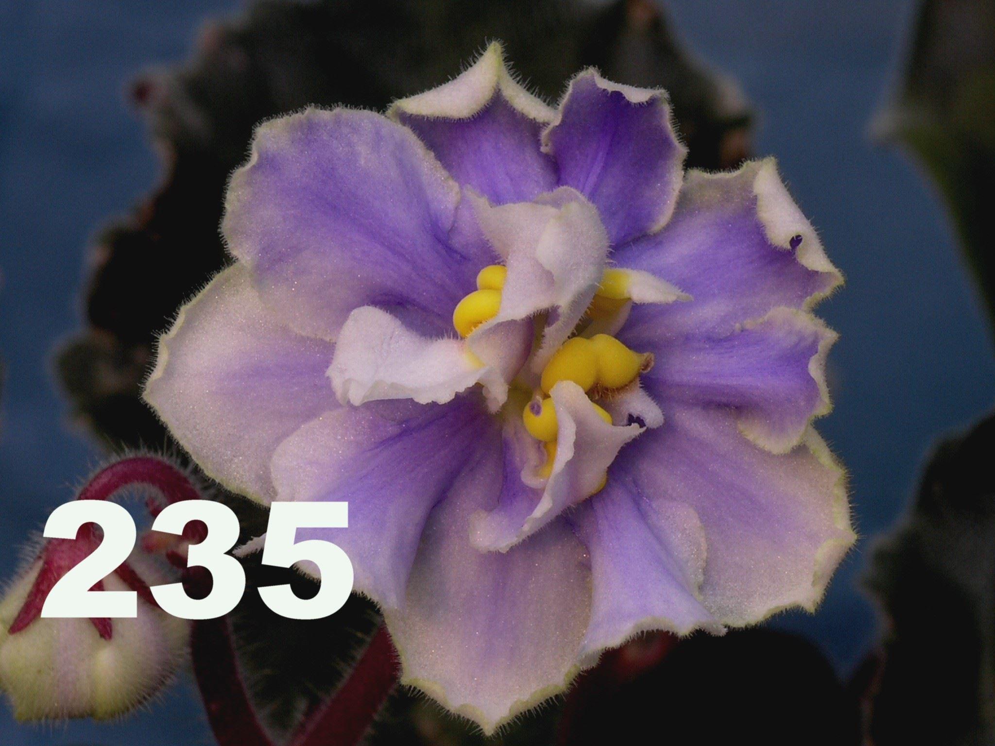 [235] 235