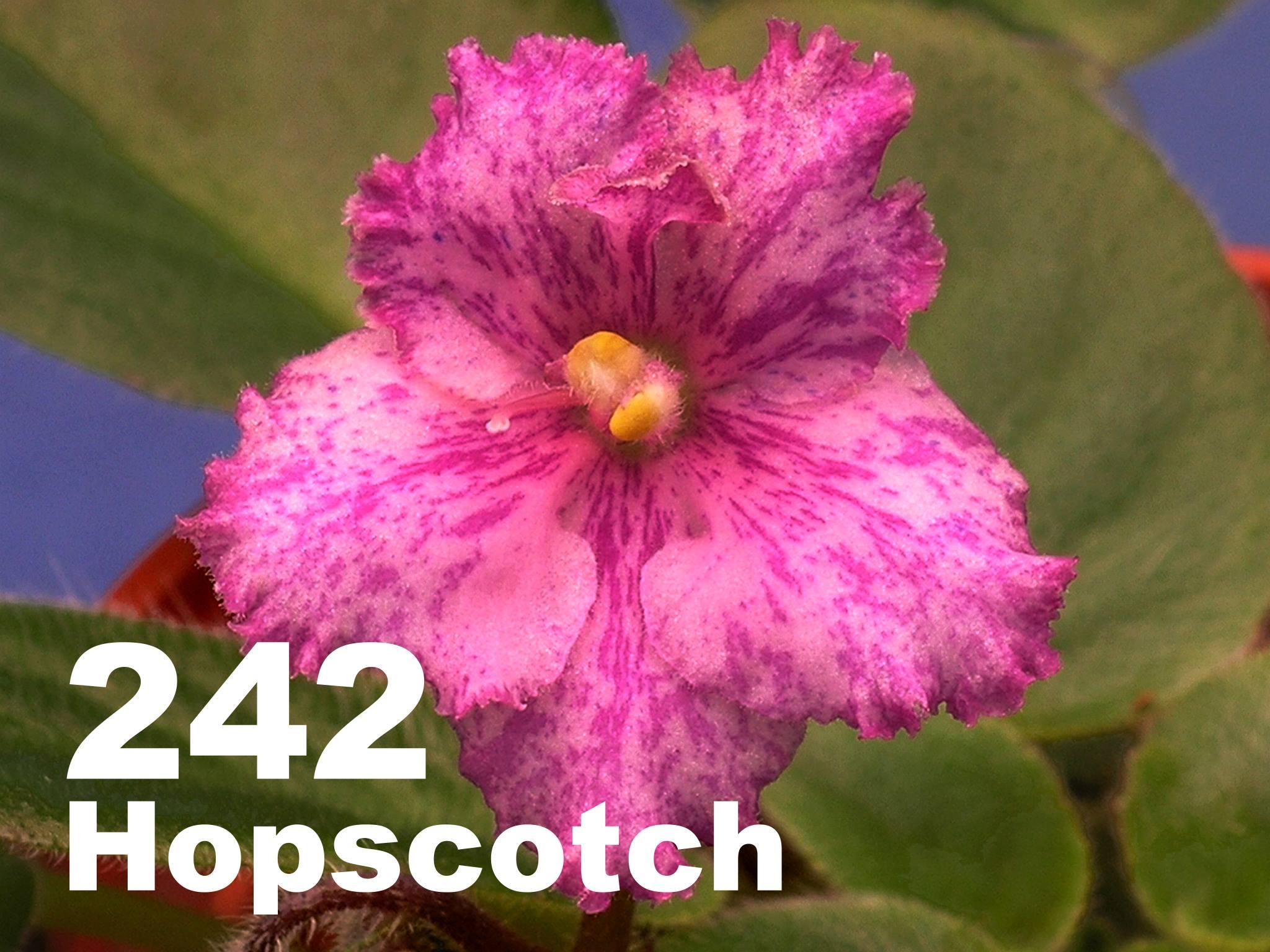 [242] Rob's Hopscotch 242