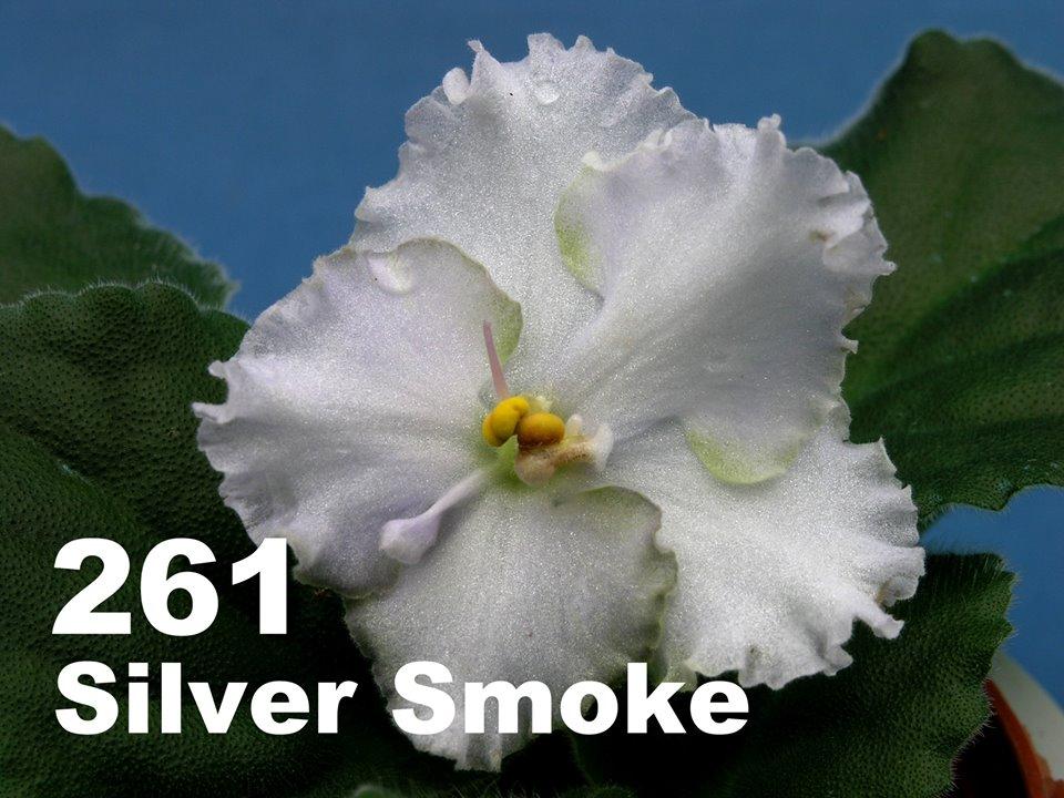 [261] Silver Smoke 261
