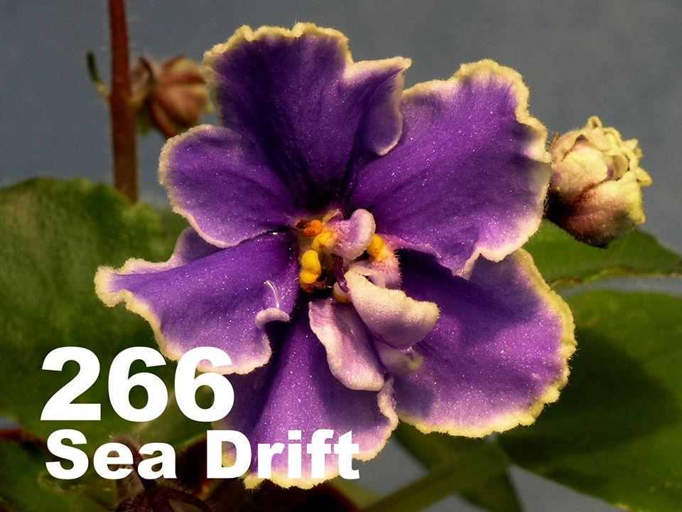 [266] Sea Drift 266