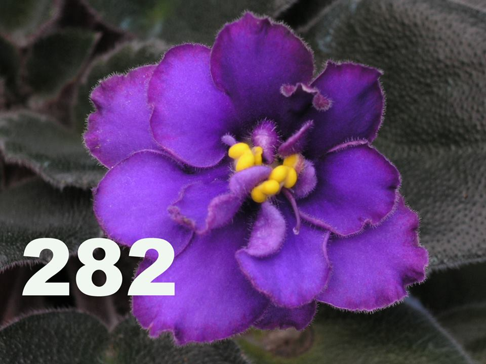 [282] 282
