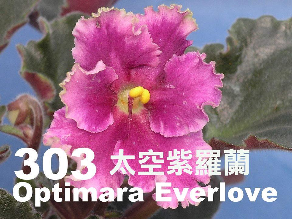 [303] Optimara EverLove 303