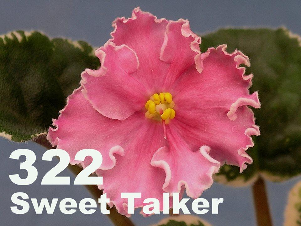 [322] Sweet Talker 322
