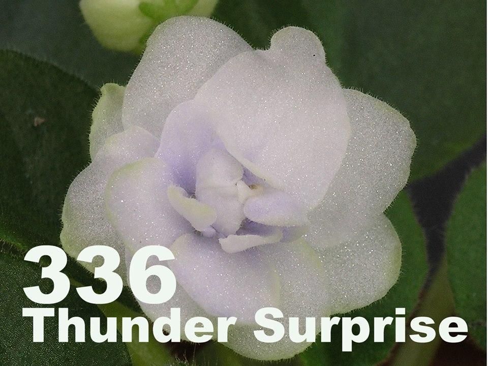 [336] Thunder Surprise 336