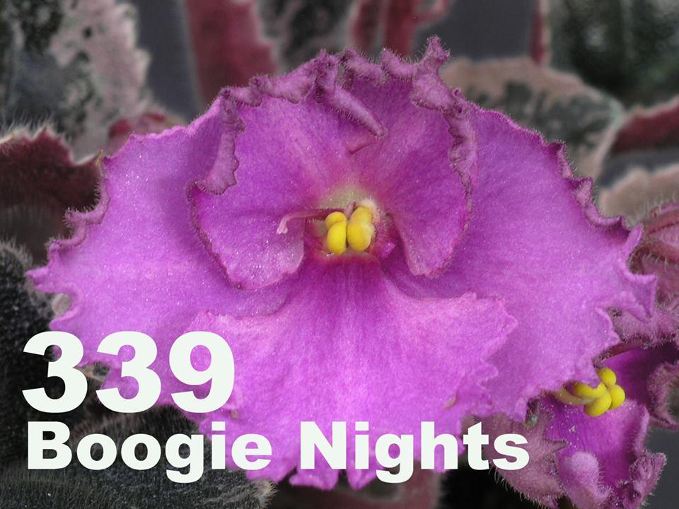 [339] Boogle Nights 339