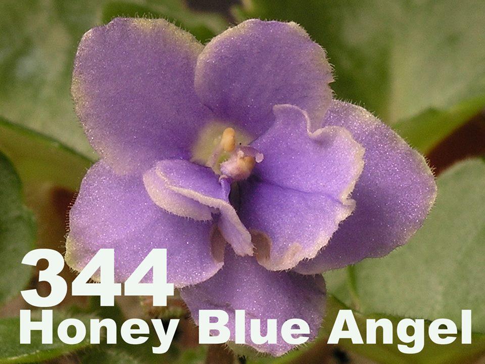 [344] Honey Blue Angel 344
