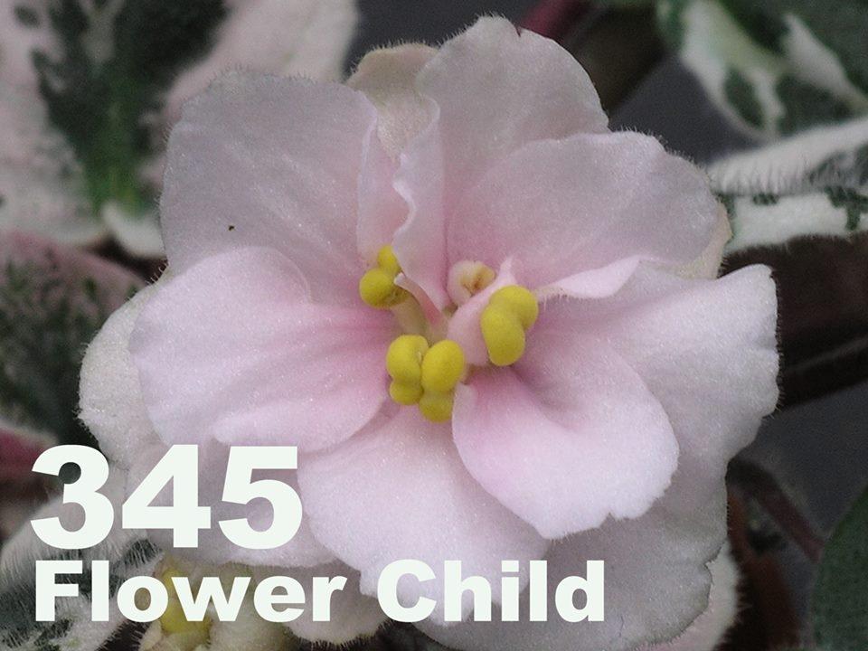 [345] Flower Child 345