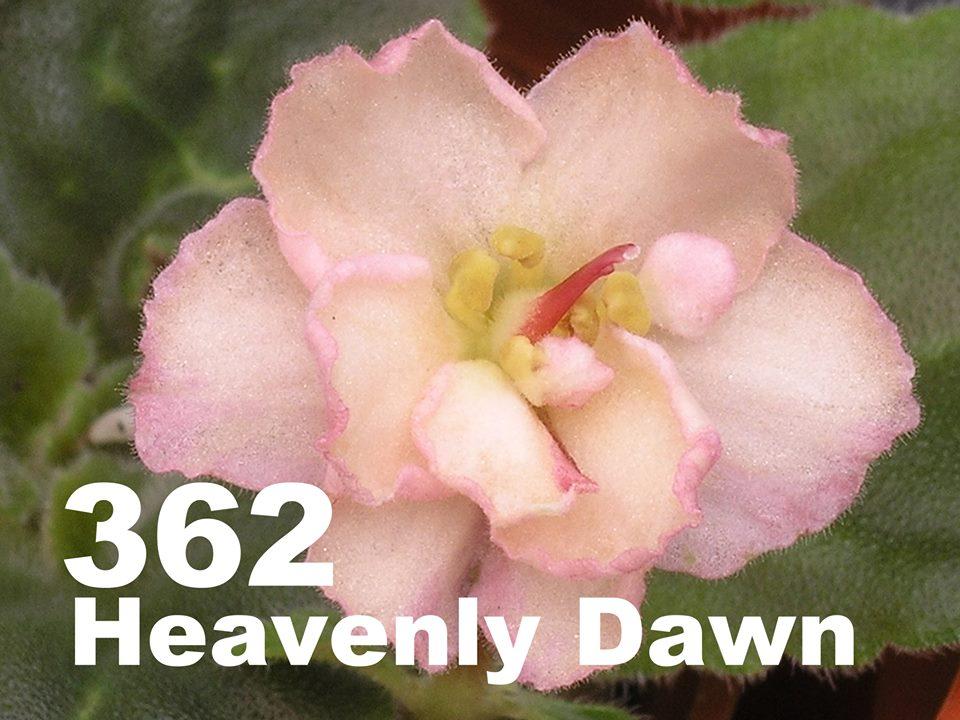 [362] Heavenly Dawn 362