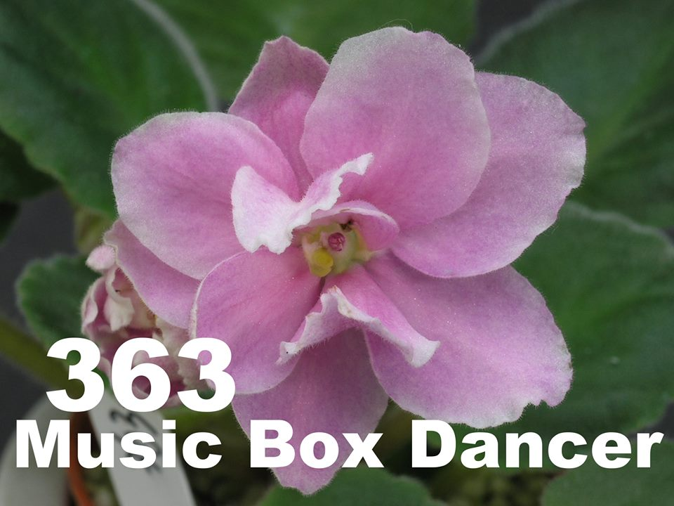 [363] Music Box Dancer 363