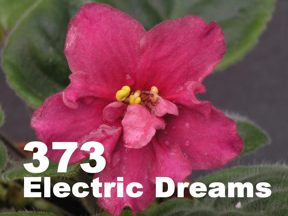 [373] Electric Dreams 373