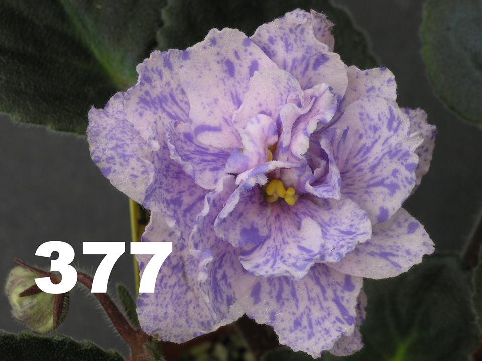 [377] 377