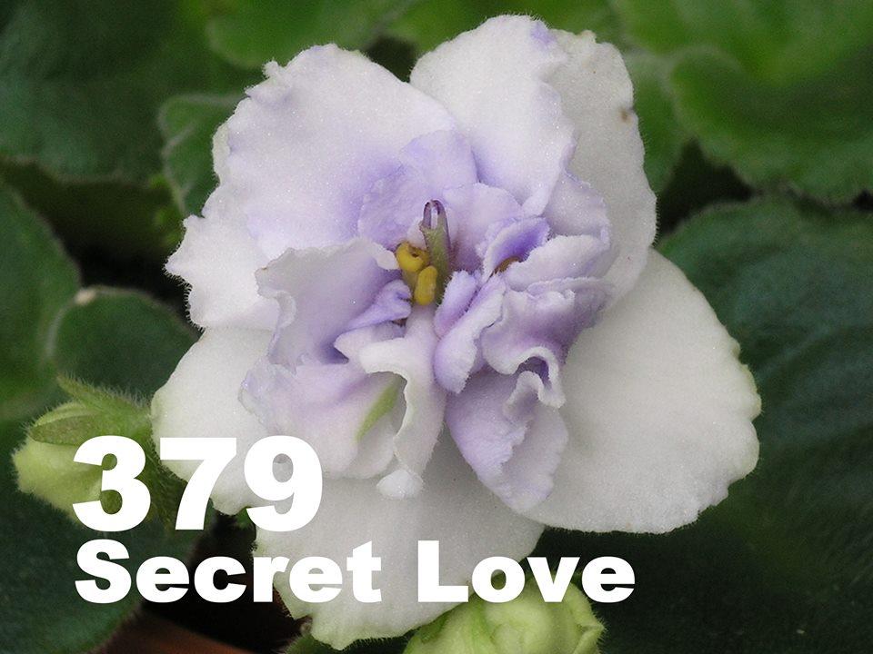 [379] Secret Love 379