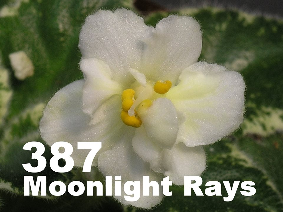 [387] Moonlight Rays 387