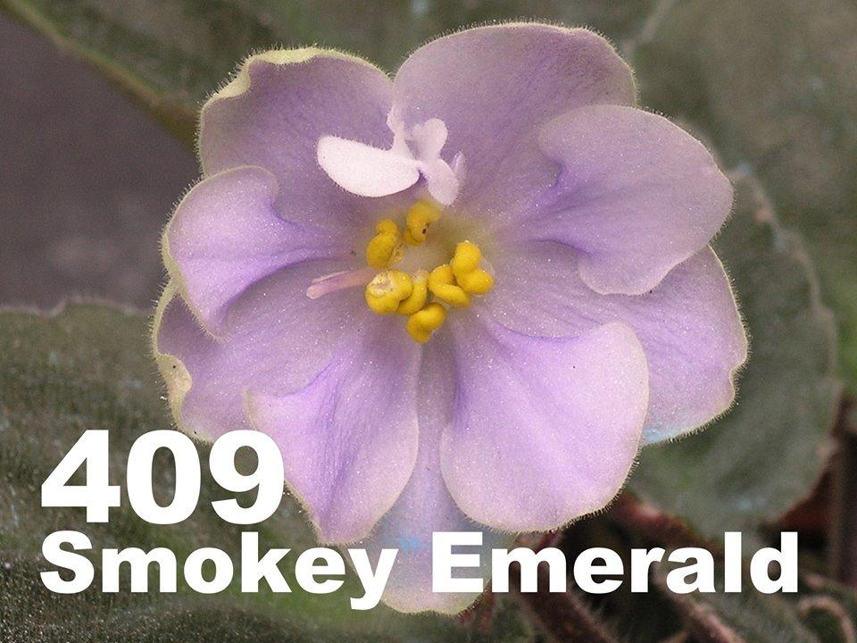 [409] Smokey Emerald 409