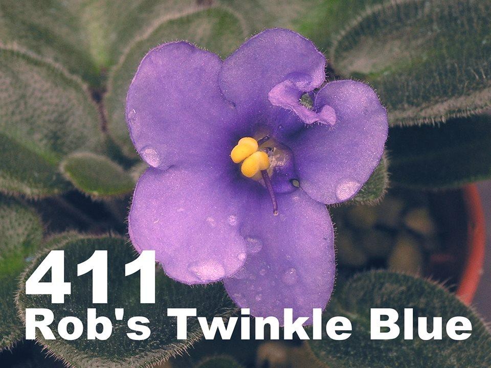 [411] Rob's Twinkle Blue 411