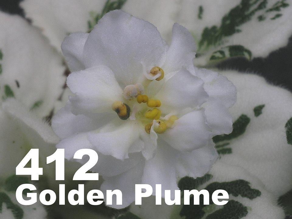 [412] Golden Plume 412