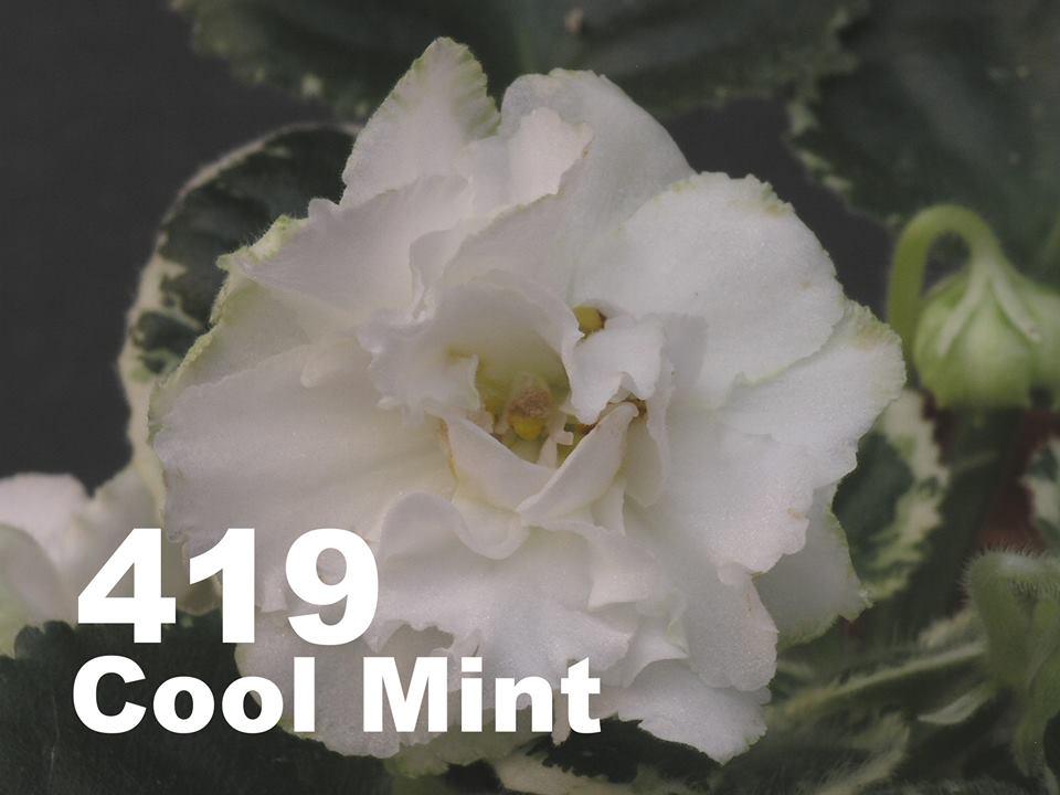 [419] Cool Mint 419