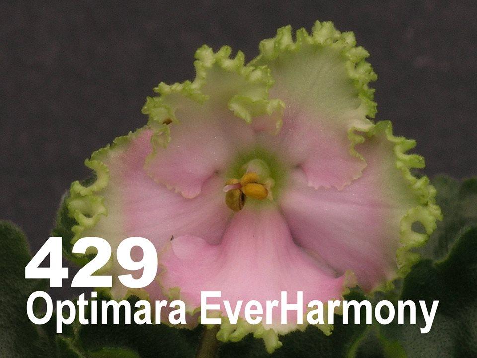 [429] Optimara EverHarmony 429