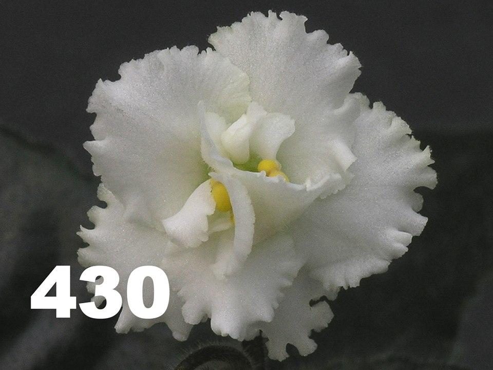 [430] 430