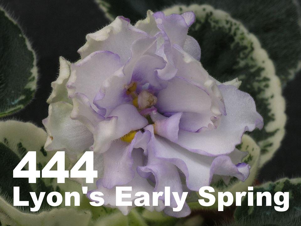 [444] Lyon's Early Spring 444