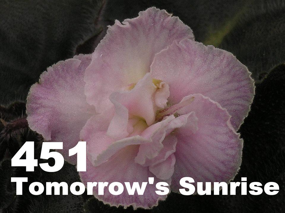 [451] Tomorrow's Sunrise 451