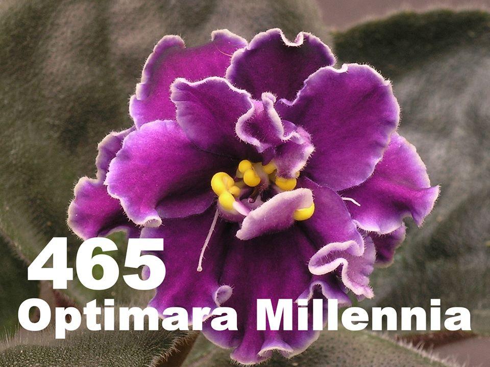 [465] Optimara Millennia 465