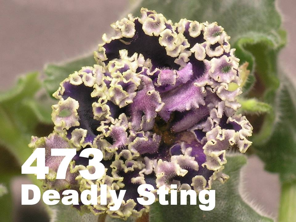 [473] Deadly Sting 473