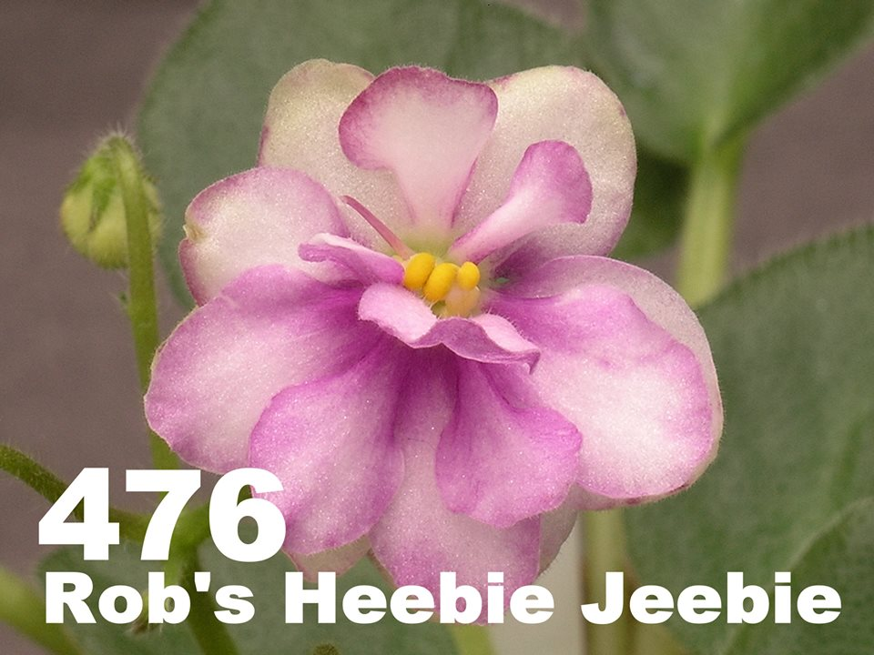 [476] Rob's Heebie Jeebie 476