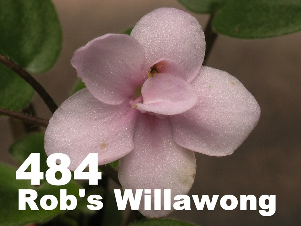 [484] Rob's Willawong 484