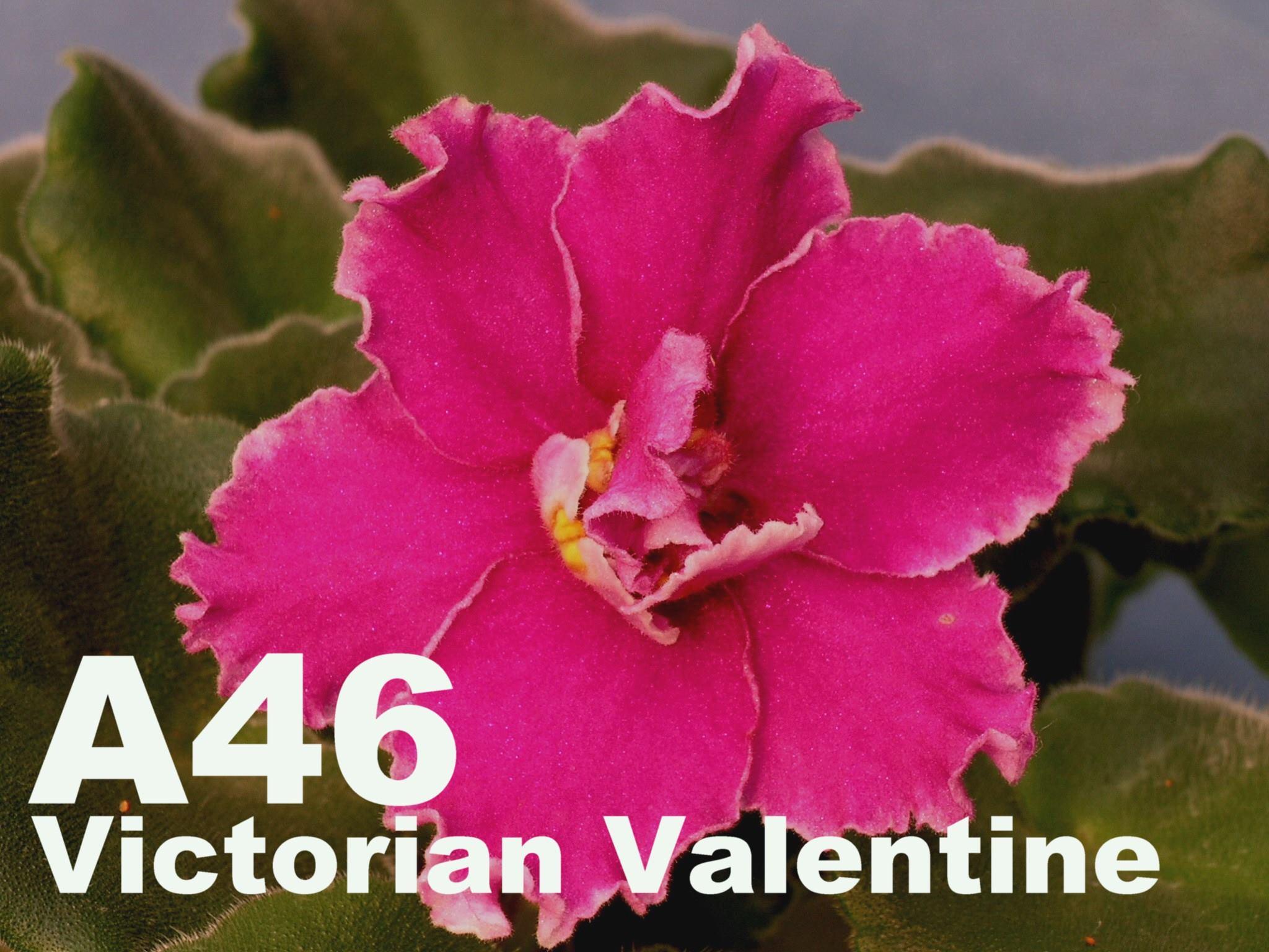 [A46] Lyon's Victorian Valentine A46