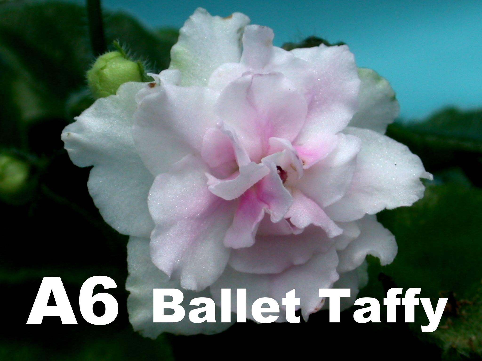 [A6] Ballet Taffy A6