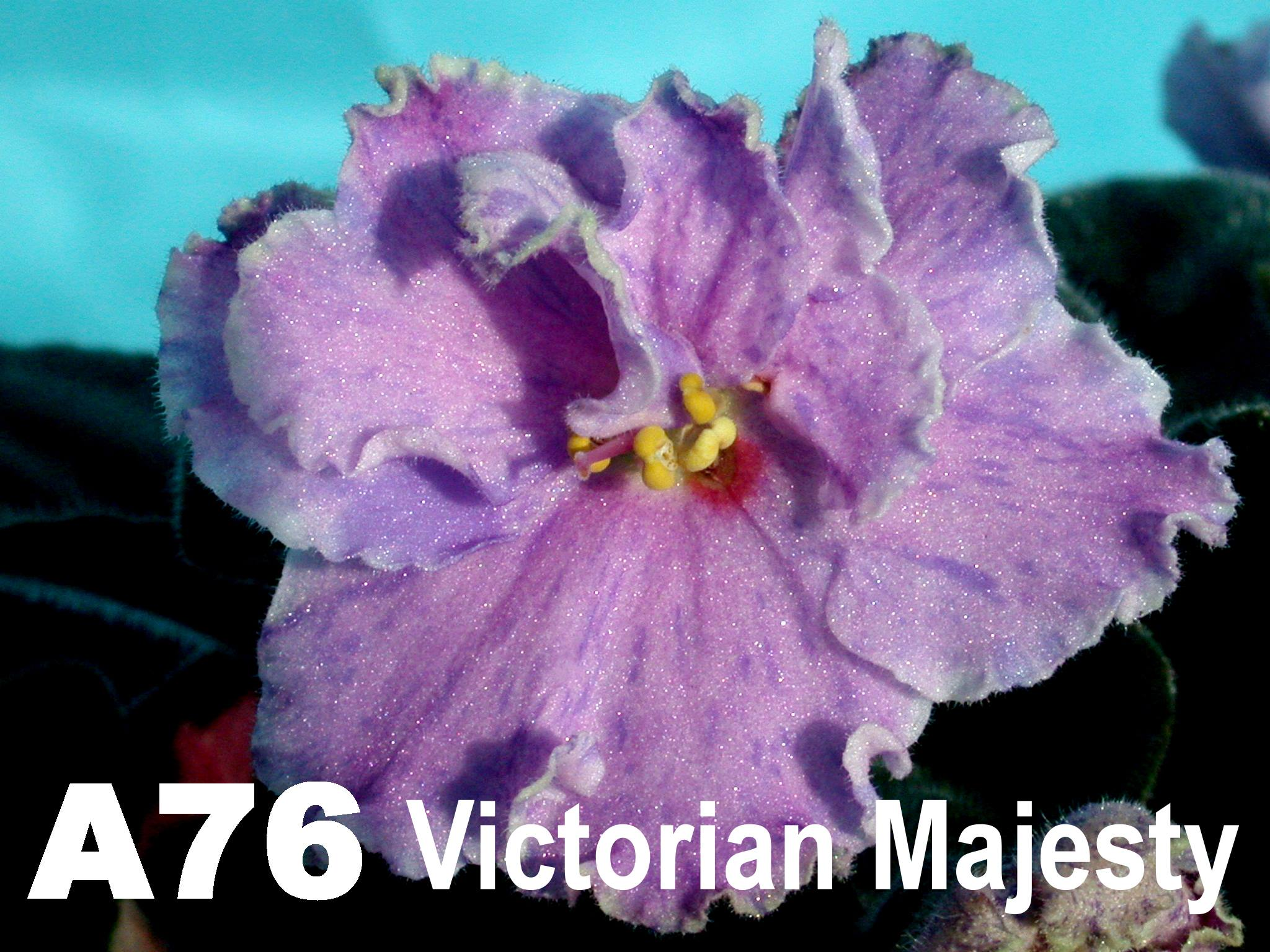[A76] Victorian Majesty A76