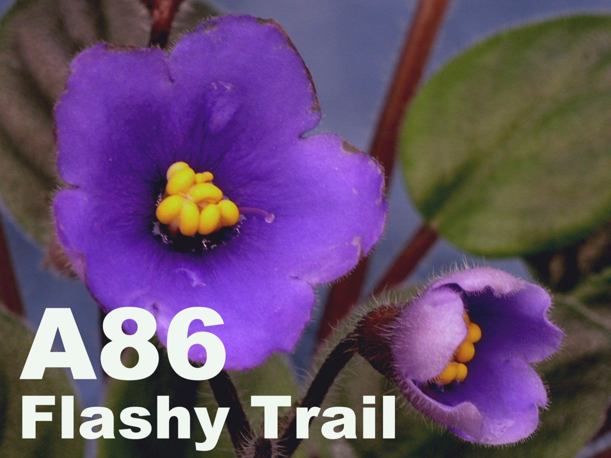 [A86] Flashy Trail A86