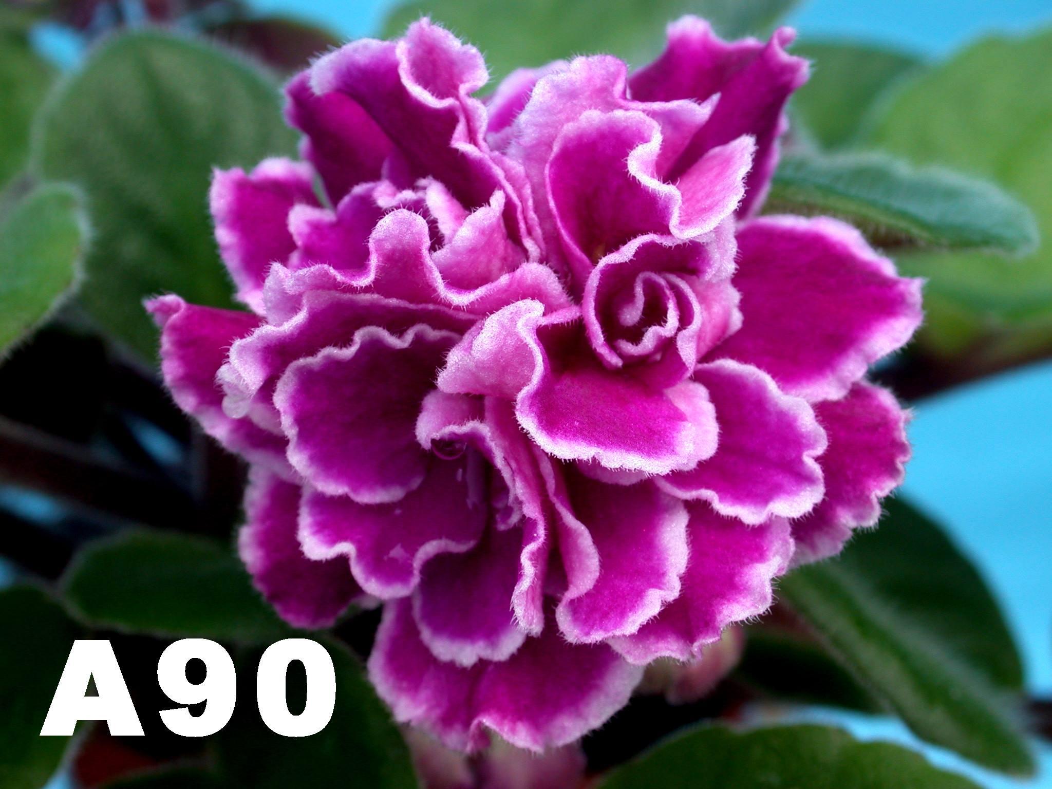 [A90] A90