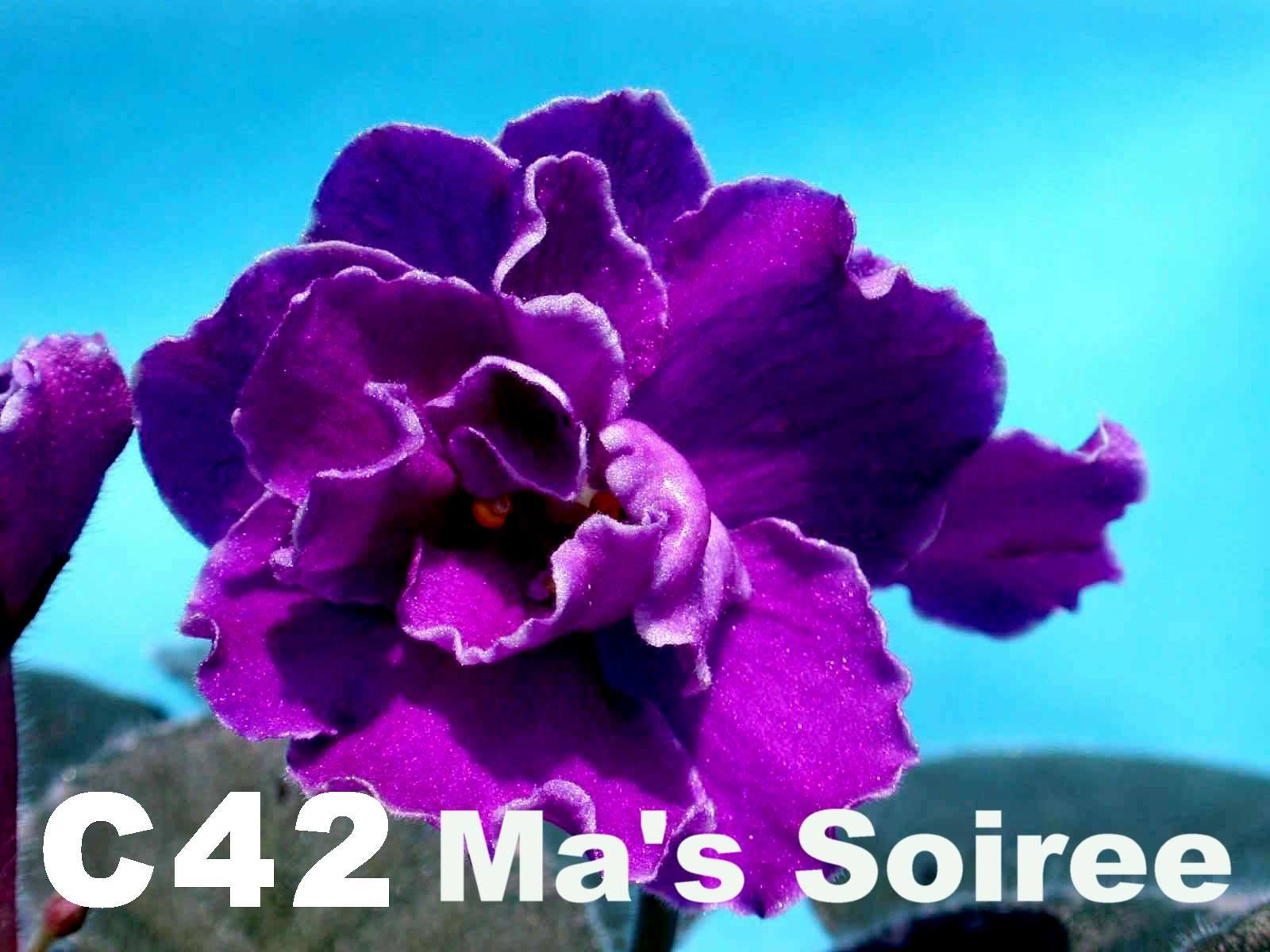 [C42] Ma's Soiree C42
