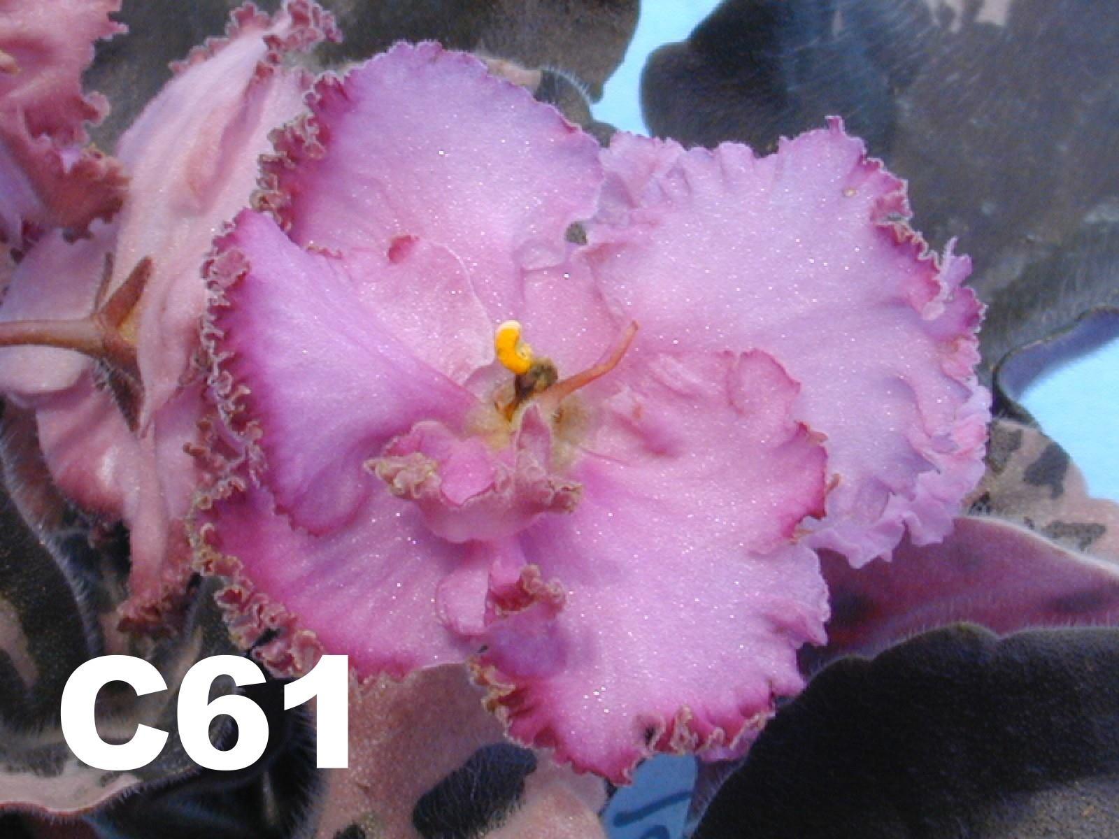 [C61] C61