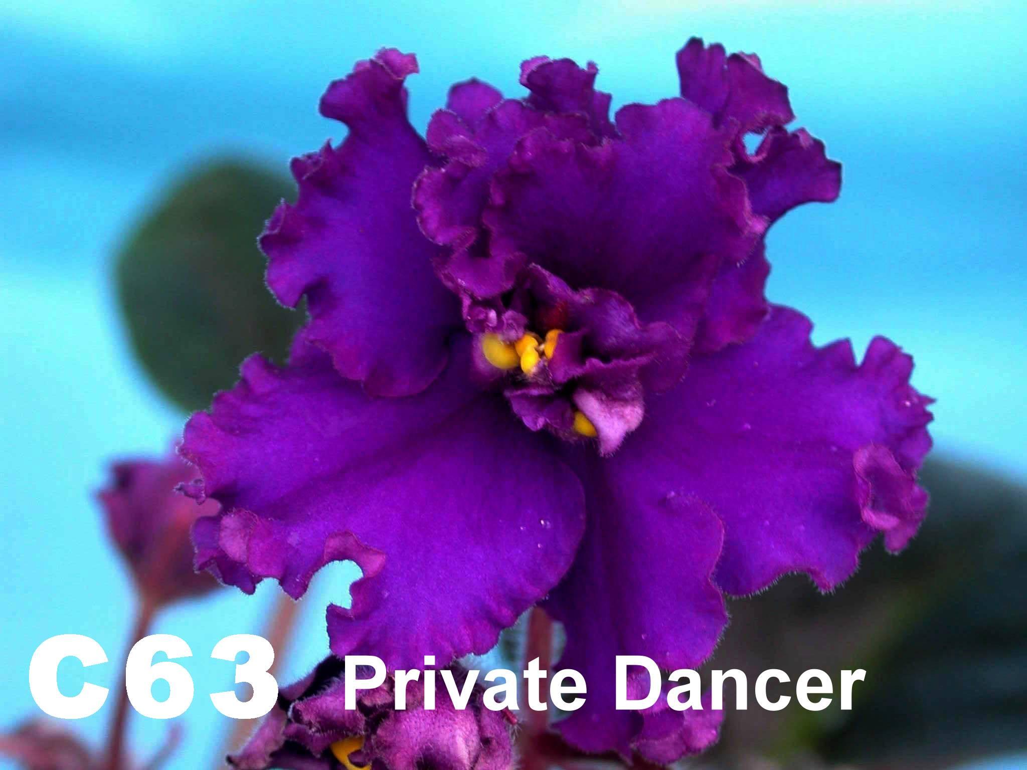 [C63] Private Dancer C63