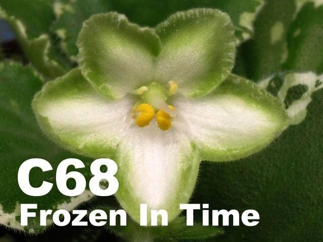 [C68] Frozen In Time C68