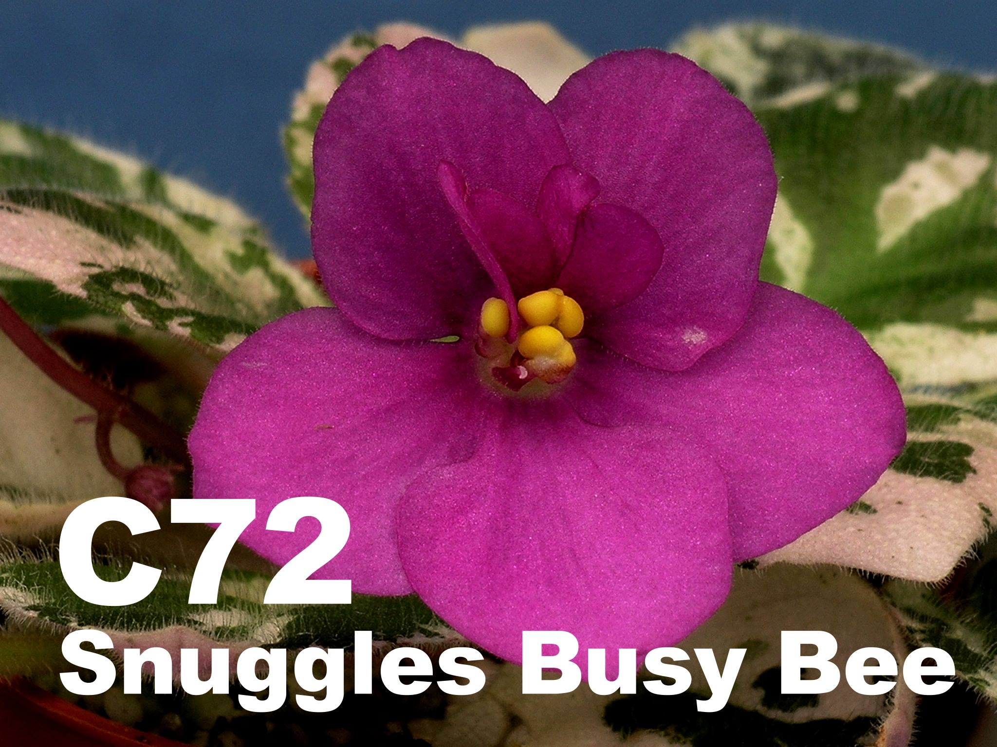 [C72] Snuggles Busy Bee C72