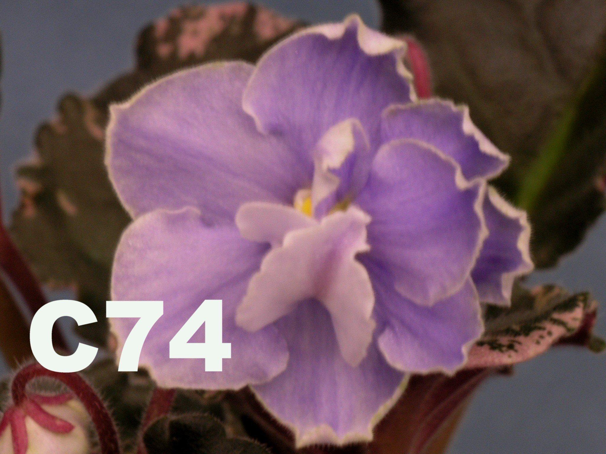 [C4] C74