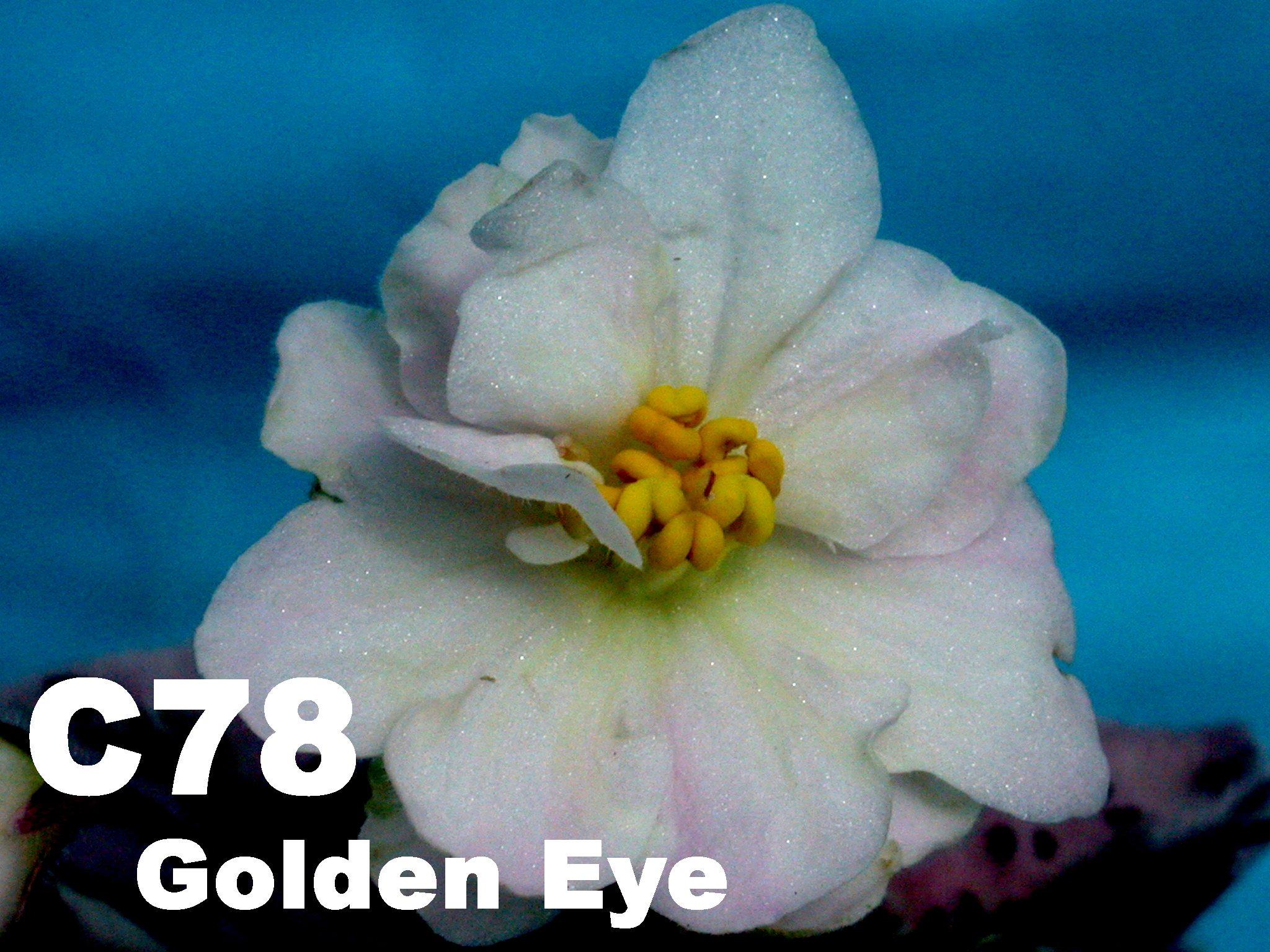 [C78] Golden Eye C78