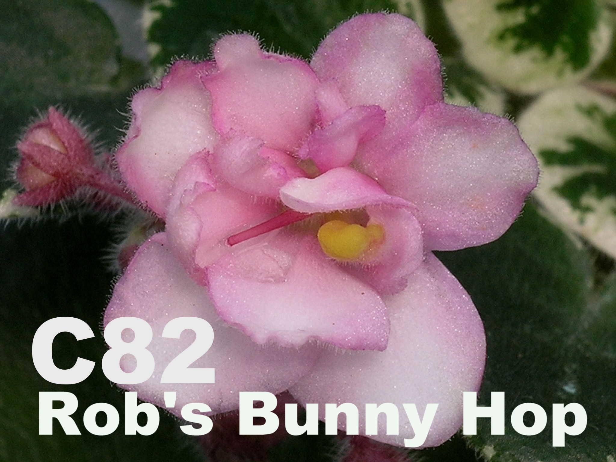 [C82] Rob's Bunny Hop C82
