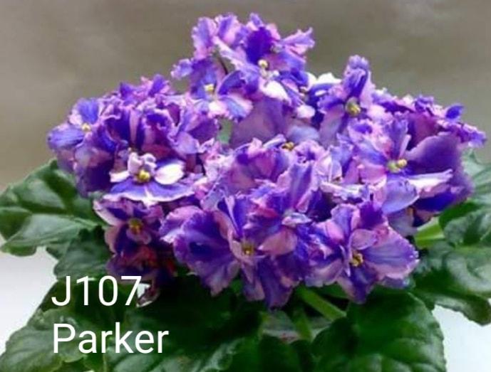 [J107] Parker J107